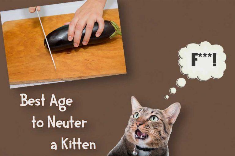 best age to neuter a kitten