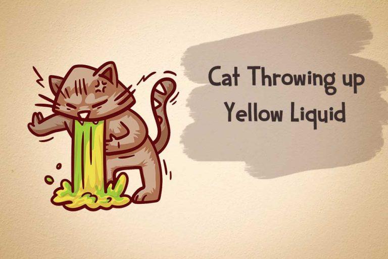 cat throwing up yellow liquid