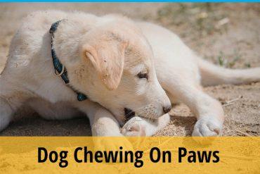 dog chew paws