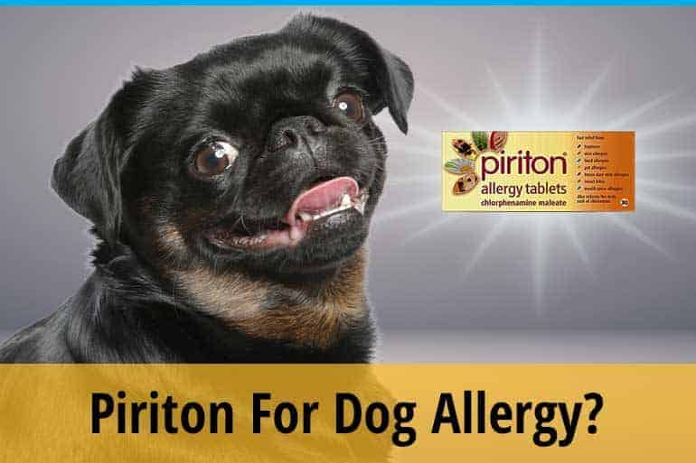 Piriton for dogs
