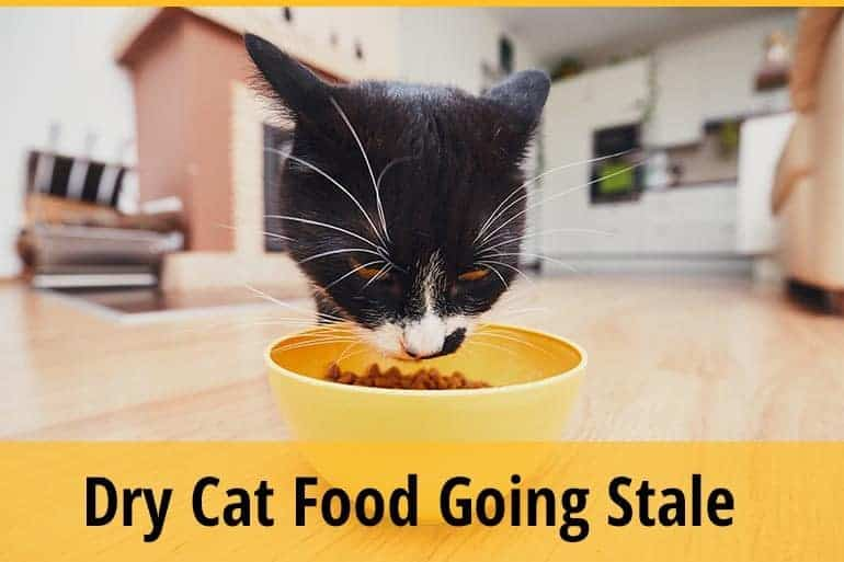 Dry Cat Food Going Stale