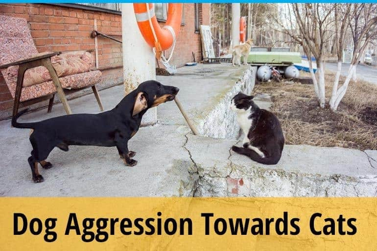 How to Stop Dog Aggression Towards Cats