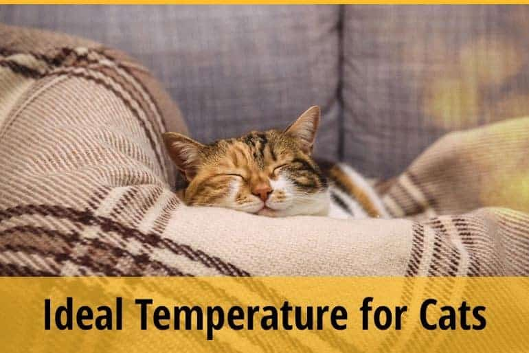 Ideal Temperature For cats