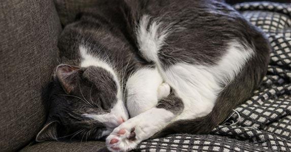 What is the ideal room temperature for cats in winter