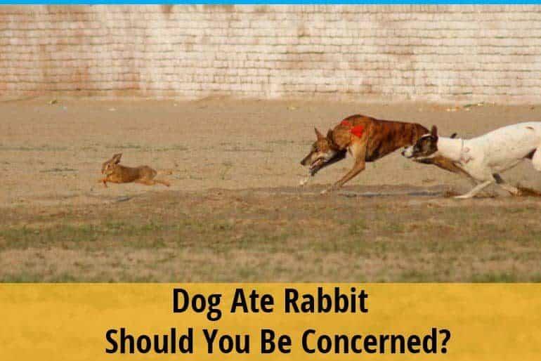 Dog ate rabbit