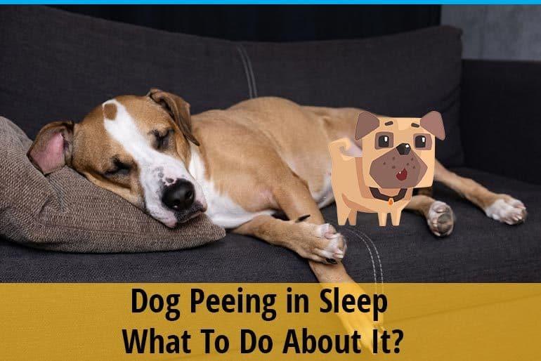 Dog Peeing in Sleep