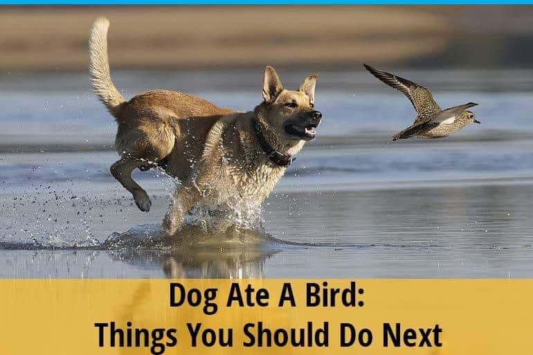 My Dog Ate A Bird
