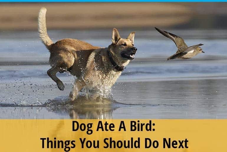My Dog Ate A Bird