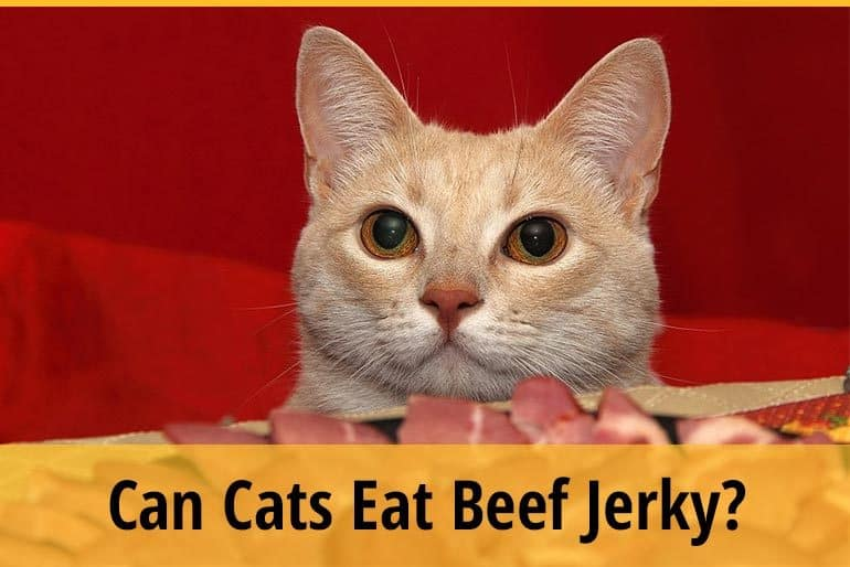 Can cat eat beef jerky