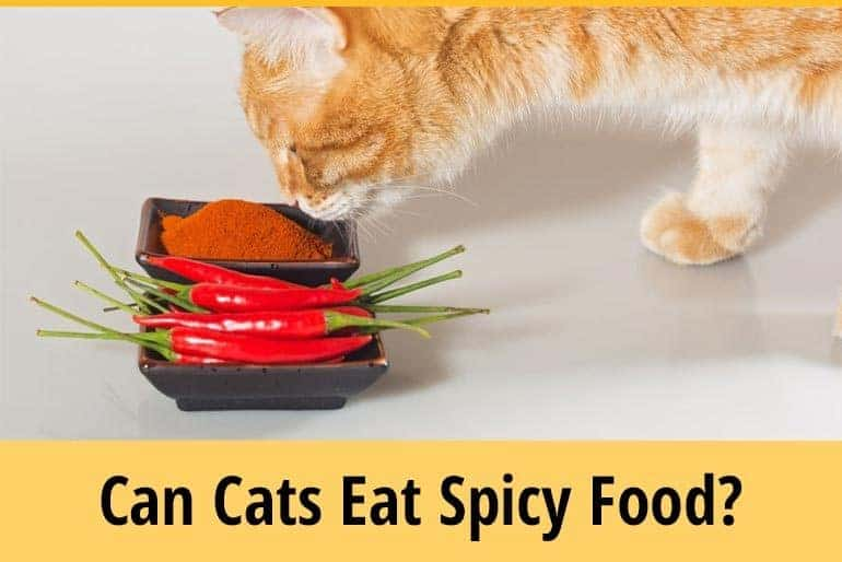 Can Cats Eat Spicy Food