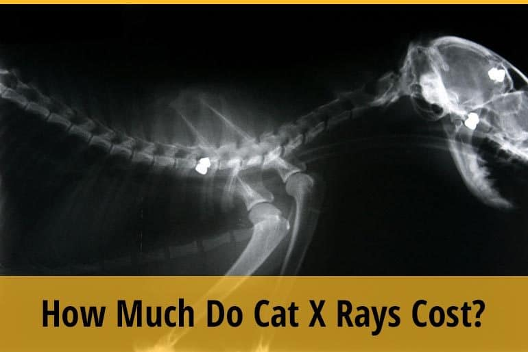 how much do cat x ray cost