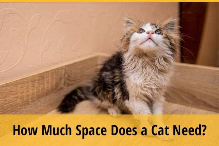 How Much Space Does a Cat Need