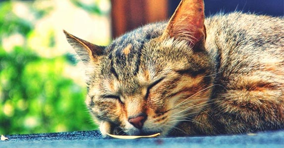 symptoms of headaches in cats