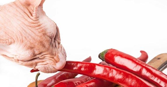 cat eats spicy food