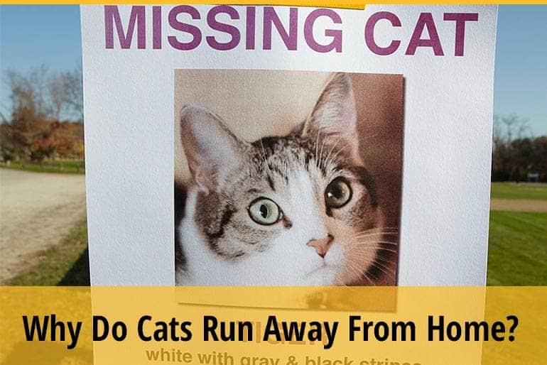 Why Do Cats Run Away From Home?