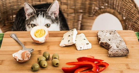 cats drawn to spicy foods