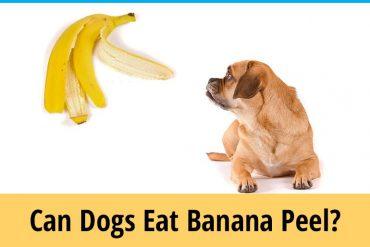 Can dogs eat banana peel