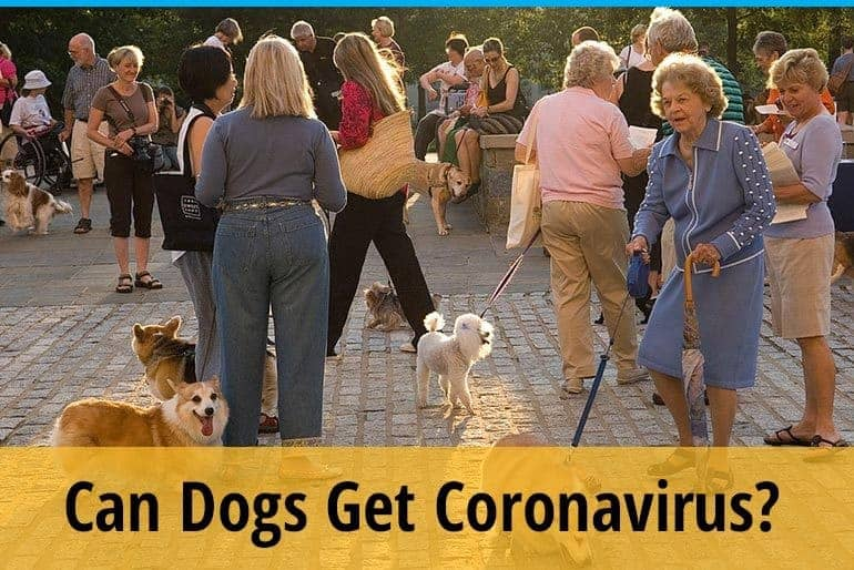 Can dogs get corona virus