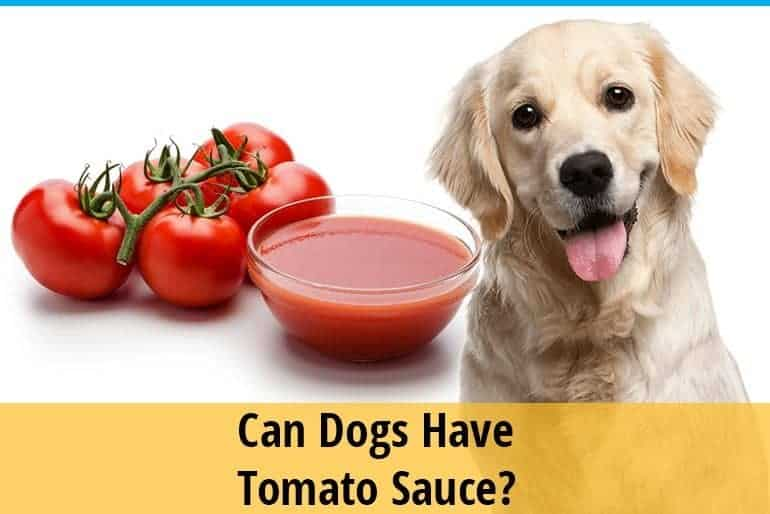 Can dogs have tomato sauce