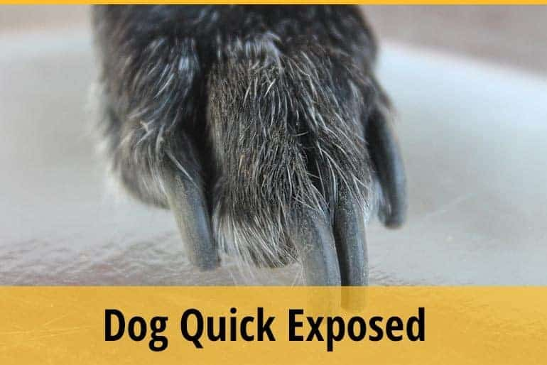 Dog Quick Expose how to treat it