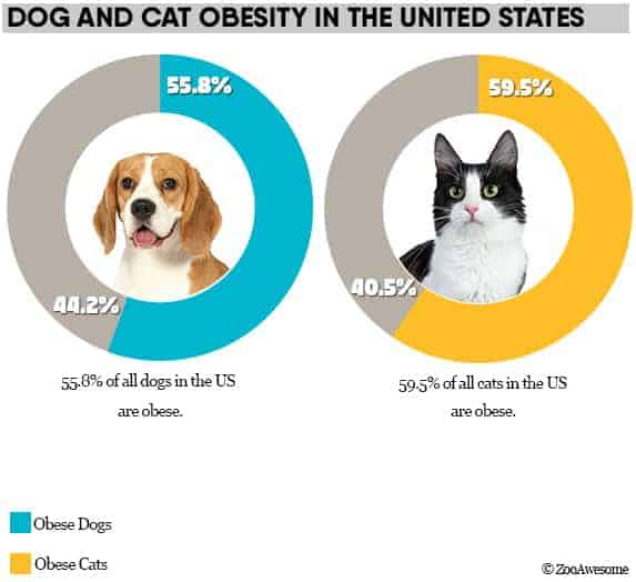 Dog and cat obesity in USA
