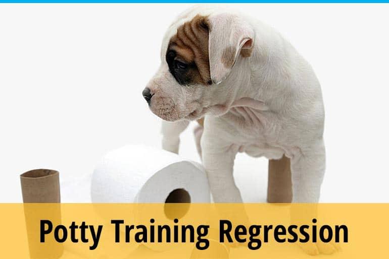 Puppy potty training regression