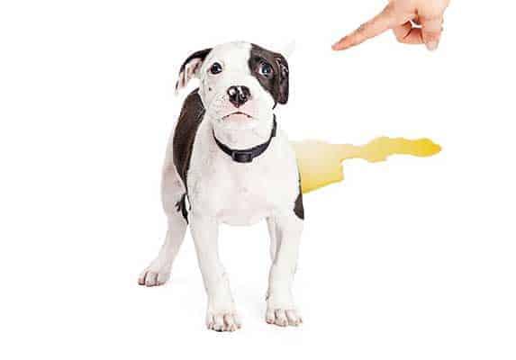 puppy training regression