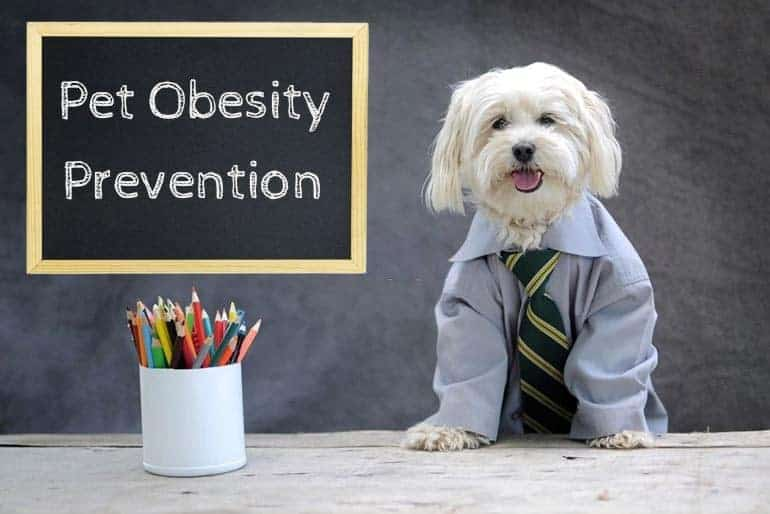 Pet obesity prevention