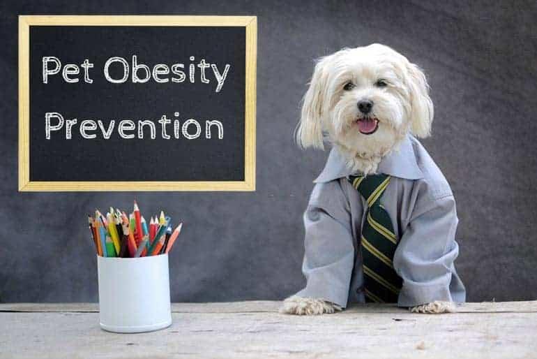 Pet obesity prevention