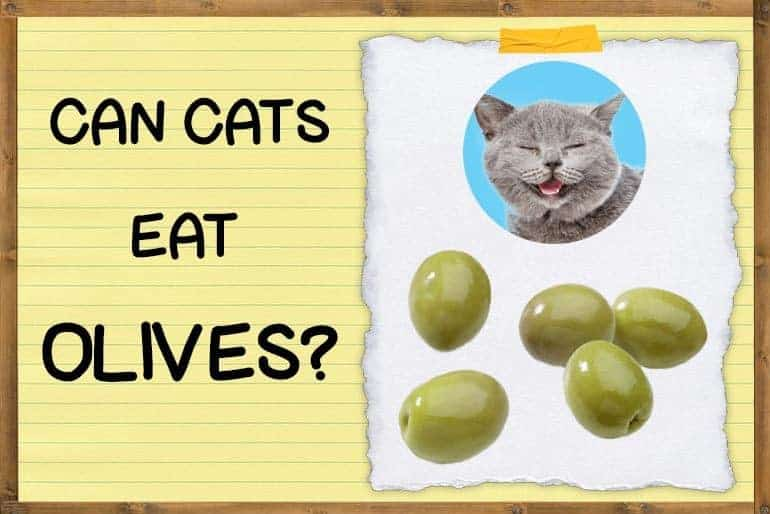 can cats eat olives