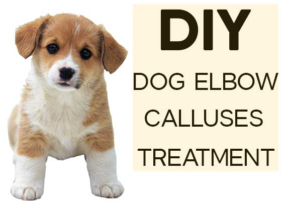 DIY Dog calluses treatment