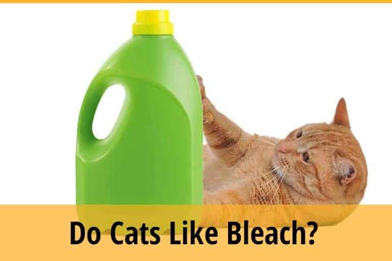 Do Cats Like Bleach