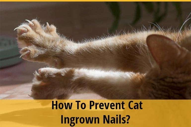 How To Prevent Cat Ingrown Nails