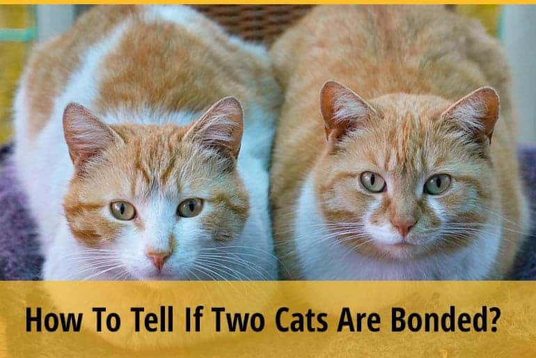How To Tell If Two Cats Are Bonded