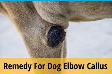 Remedy for dog elbow callus