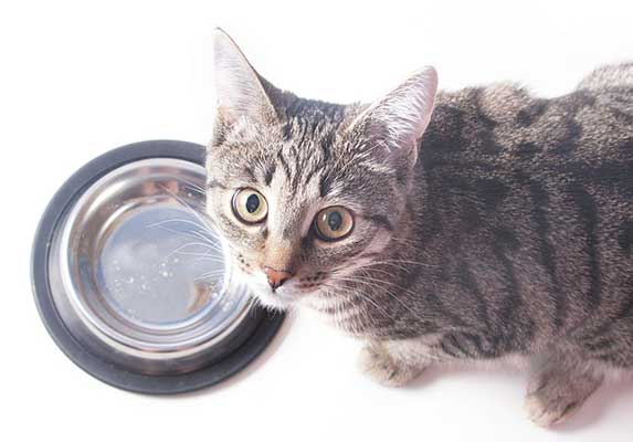 cat with empty bowl