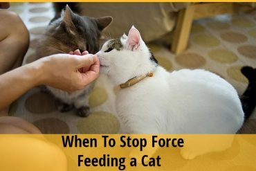 How and When To Stop Force Feeding a Cat