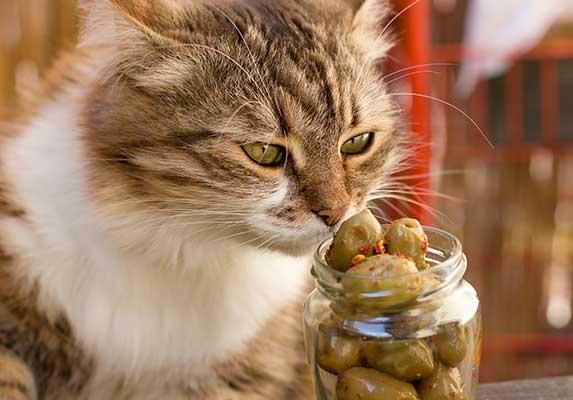 cat eats olives