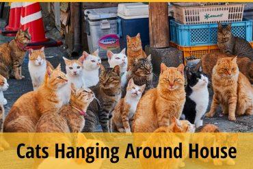 Cat Hanging Around My House