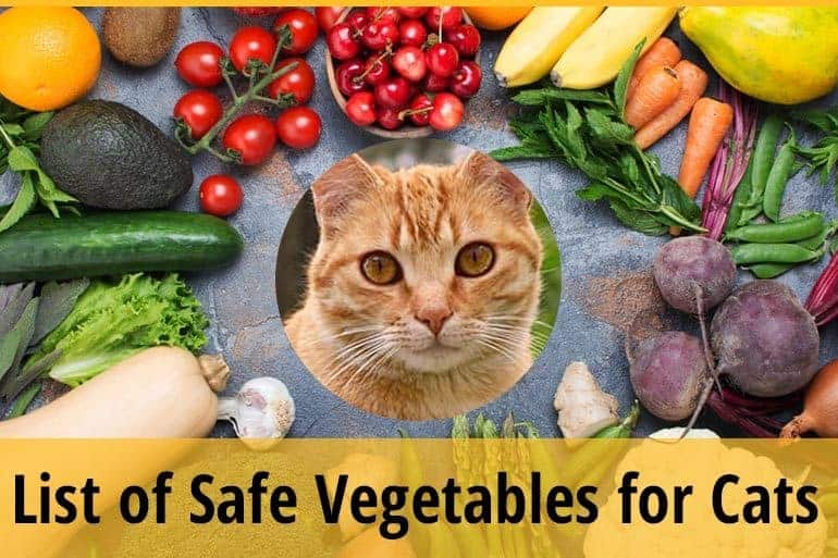 List of safe vegetable for cats