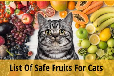 Safe fruit for cats
