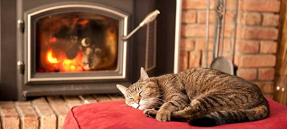 Cat sleeping in a fireplace