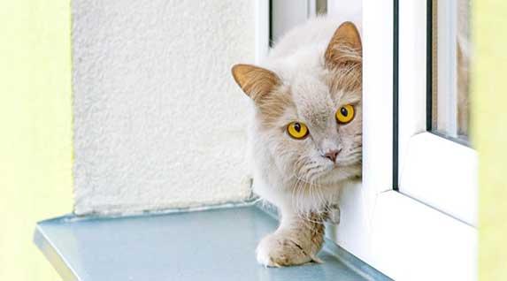 cat peeping through a window