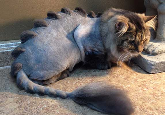 Dino cut for cats