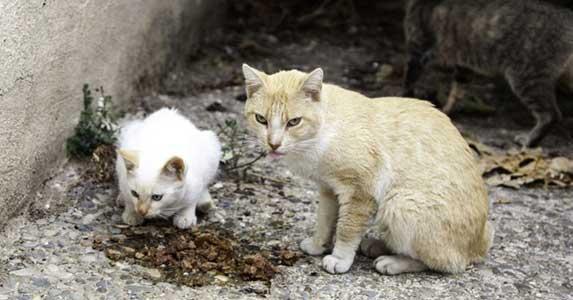 Stray cat eating