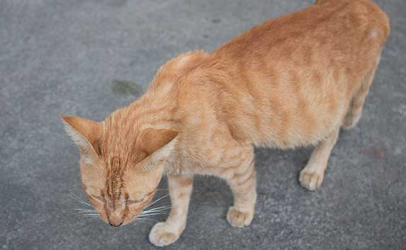 Stray pregnant cat