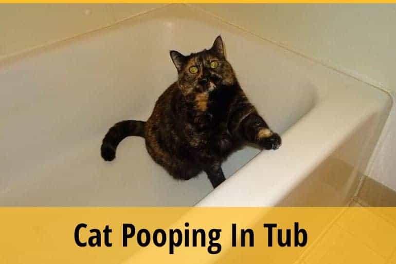 Cat Pooping In Tub