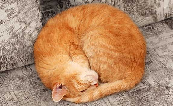 Cat curled up into a ball