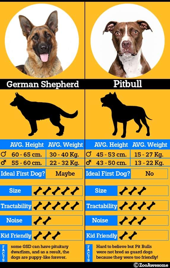 German shepherd and pitbull comparison chart