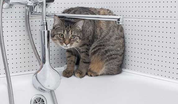 cat in bath tub